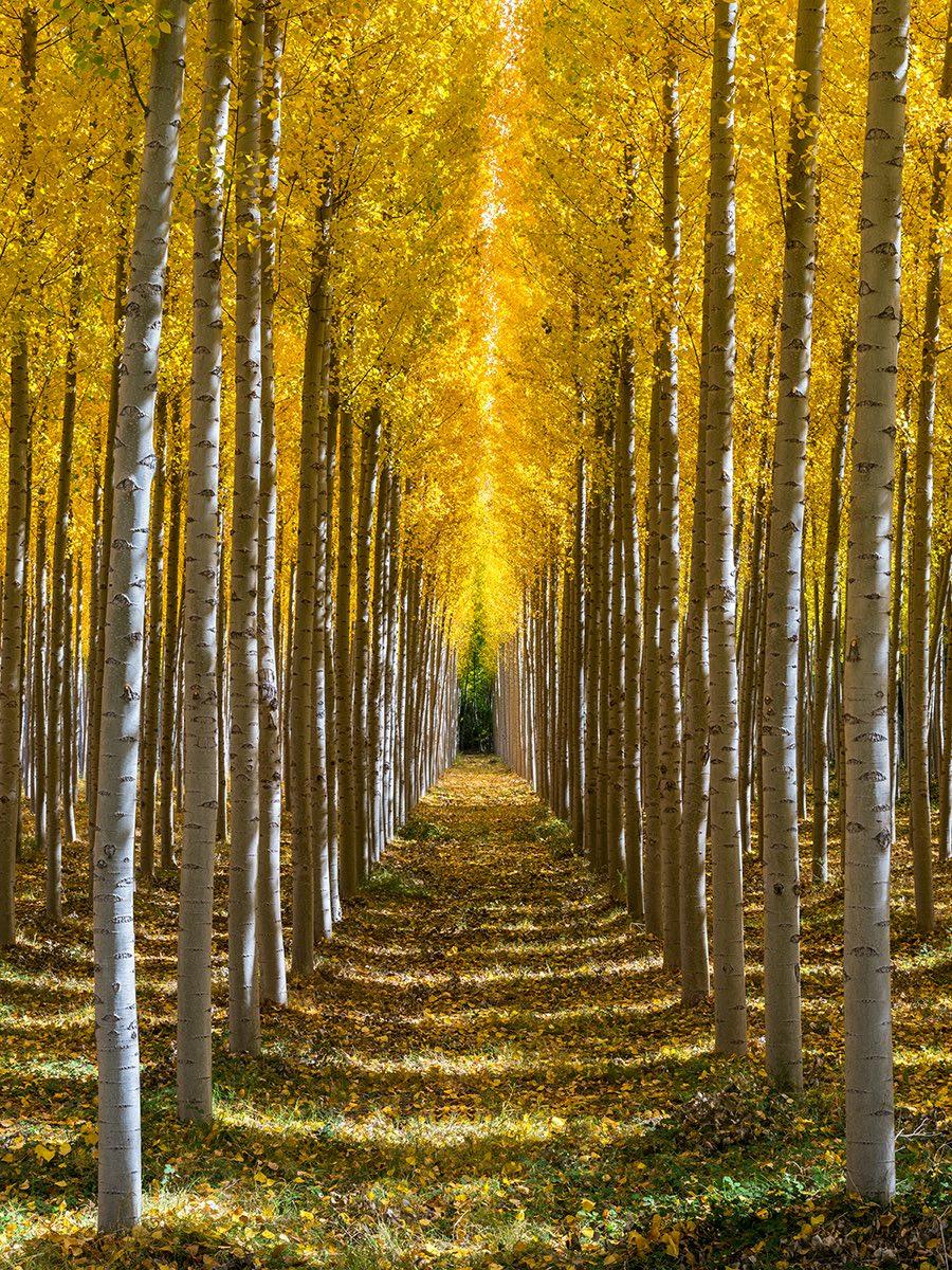 """""""Pathway of Dreams"""""""
